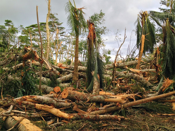 Iselle damage in Hawaii. Photo by Greg Asner