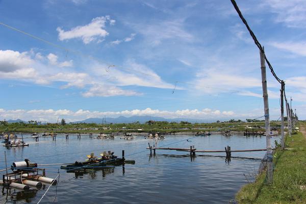 A shrimp farm in Banyuwangi. Photo by Melati Kaye.