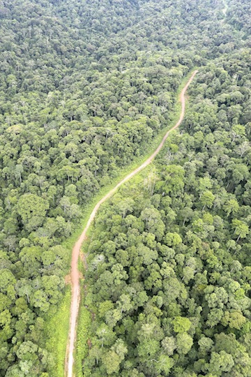 A logging road slices through a rainforest in Sabah, Malaysian Borneo Photo by Rhett A. Butler.