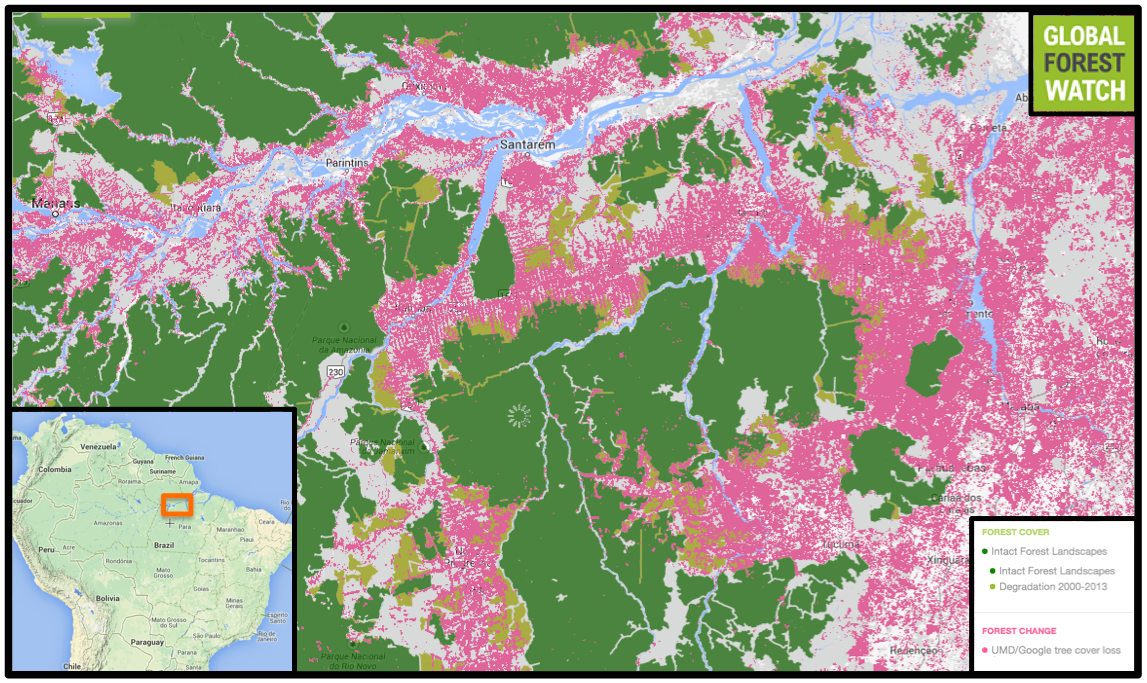 Canada russia brazil lead world in old growth forest loss overall the 87 million hectare region along the amazon pictured lost approximately seven million hectares of forest between 2001 to 2013 according to gumiabroncs Image collections