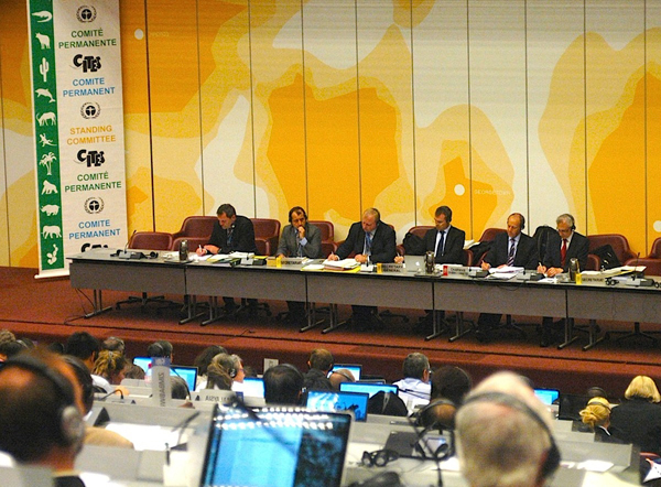 The CITES leadership at the podium decided to prevent the creation of a Great Apes Working Group at the 65th Standing Committee meeting to avoid discussion of illegal trade involving CITES national officials. Photo by Daniel Stiles.