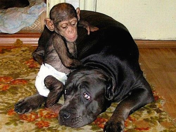 The author found baby chimpanzees offered for sale on Facebook as pets for children. The seller, a woman in Cameroon, promised to provide all necessary documents, including a CITES export permit.
