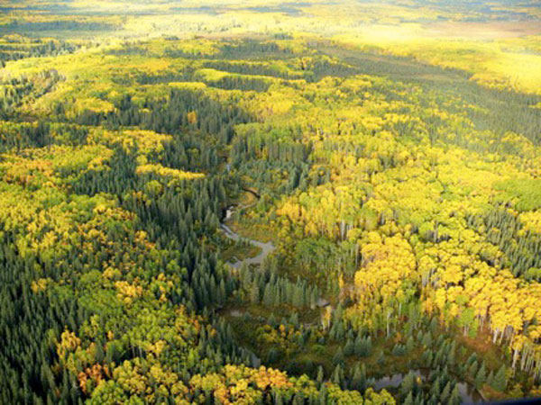 The constant rhythm of disturbance leads to a spectacular patchwork of species diversity seen here in this boreal forest. Image courtesy of M.P. Marklevitz.