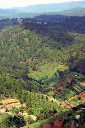 Cropland carved out of forest in central Vietnam. Photo by Morgan Erickson-Davis.