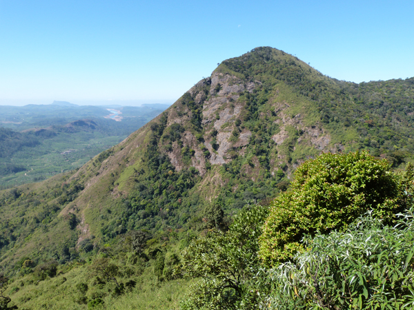 The mountainous Anamalai Hills of Tamil Nadu, India where the study took place Photo credit Claire Wordley