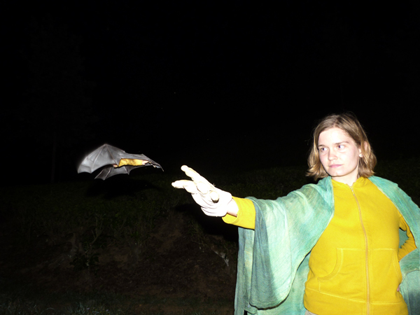 Vera Steinberg, a volunteer on the project, releases the Greater Asiatic Yellow House Bat Scotophilus heathii so its call can be recorded. The call of this species is published for the first time. Photo credit Claire Wordley