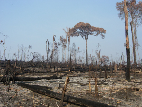 Recent deforestation in the Brazilian Amazon