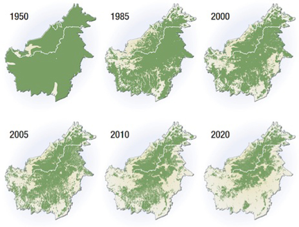 Indonesia has the highest rate of forest loss in the world, with the largest area located in Kalimantan on the island of Borneo. At current deforestation rates, little will be left by 2020. Map courtesy of WWF.
