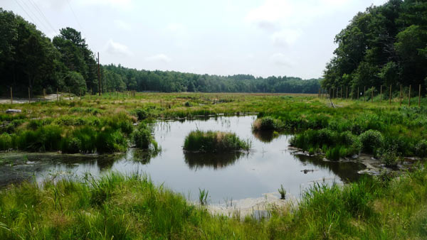 Eel River Headwaters after restoration. Photo credit: Massachusetts Department of Fish and Game