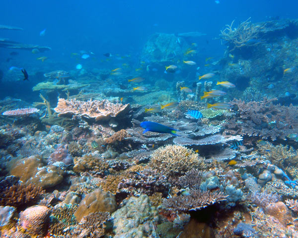 Many species, not just human beings, depend on coral reefs for sustenance and protection.