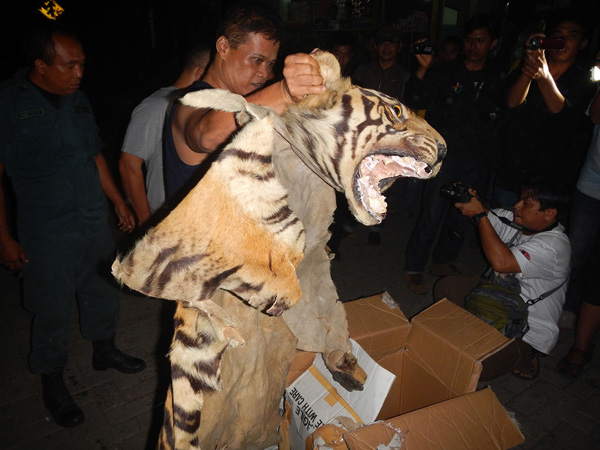 Confiscated tiger parts and suspects. Photo by the WCS Wildlife Crimes Unit