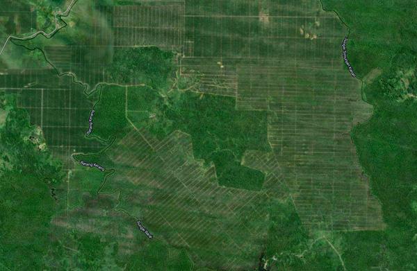 Oil palm plantations in Sarawak, Malaysia