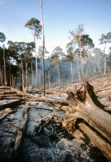 Picture of an Indonesian forest fire, home to the remaining Sumatran rhino's. Courtesy of Alain Compost