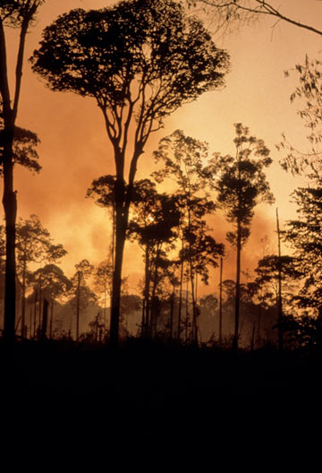 An Indonesian forest fire, home to the remaining Sumatran rhino's. Courtesy of Alain Compost