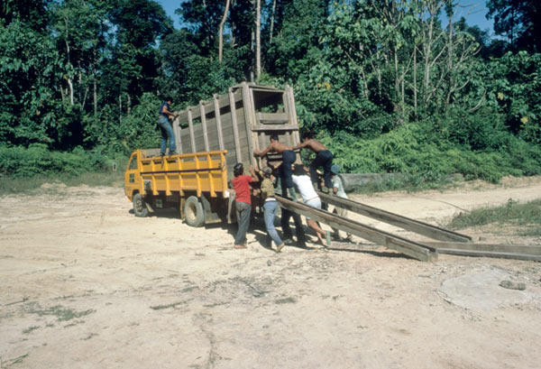A captured Sumatran rhino being loaded onto a transport truck. Courtesy of Alain Compost