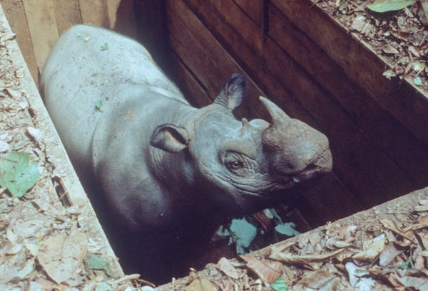 Pit fall traps are the current safe method of capturing these animals. Courtesy of Alain Compost