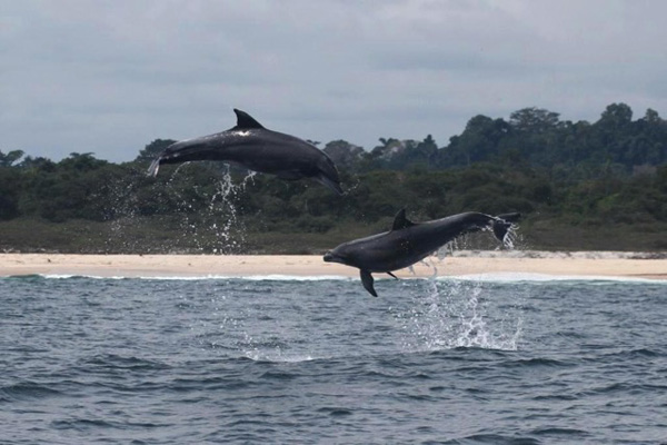A pair of bottlenose dolphins frolic in the waters of Mayumba National Park.