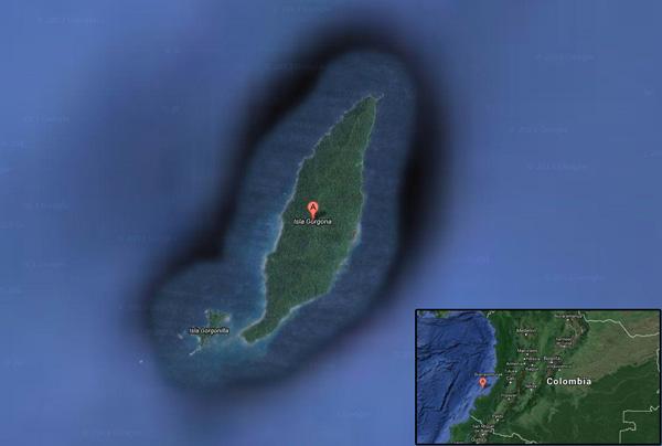 Isla Gorgona, Colombia. Image courtesy of Google Earth..
