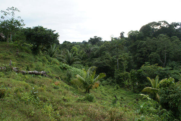 Habitat (forest to the right) of Andinobates geminisae at Palmilla, District of Donoso, Colón Province, Panama.