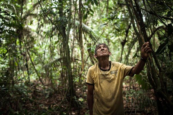The 'ribeirinho' (river-dwelling person) Chico Catitu joins the Munduruku to clear the trail. Photo: Marcio Isensee e Sá