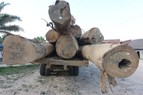 Logging is still big business around the Tacana indigenous territory; deforestation rates are far lower inside the territory than in surrounding area. Photo by Barbara Fraser