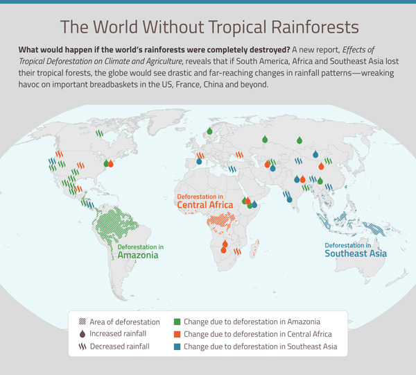 2014 the year in rainforests a study published in biological conservation found that 95 percent of deforestation in the brazilian amazon occurs on land less than 5 kilometers from a gumiabroncs Choice Image
