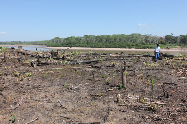 Farmers can plant crops in the Tambopata Reserve buffer zone, but some neighbors in the tourism corridor object to the clearing and burning of fields. Photo by Barbara Fraser.