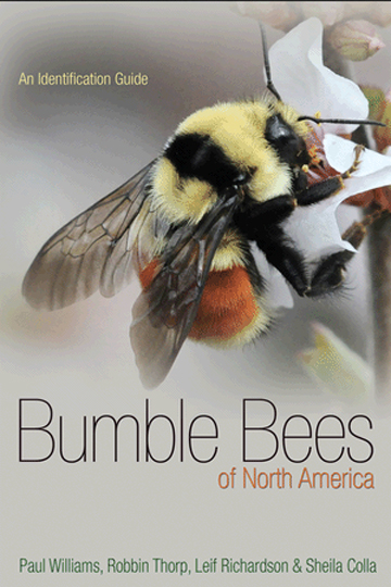 Bumble Bees of North America – book review