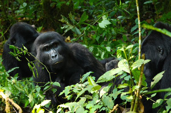 Reporter's Journal: The forests of Uganda