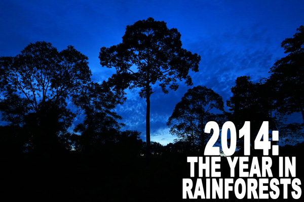 2014: THE YEAR IN RAINFOREST NEWS