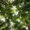Rainforest canopy in Mossman Gorge