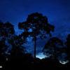Tropical rainforest at twilight, Sabah, Malaysia