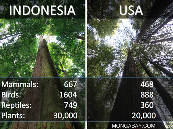Comparison of biodiversity for selected groups between the United States and Indonesia