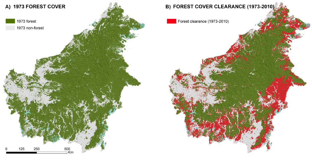 30 of Borneos rainforests destroyed since 1973