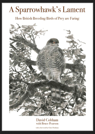 A Sparrowhawk's Lament: How British Breeding Birds of Prey Are Faring– book review