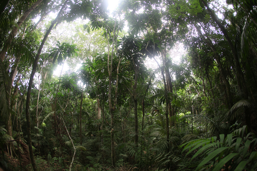 BBC World Service: Climate Change and Community Forest Management in Kuna Yala, Panama