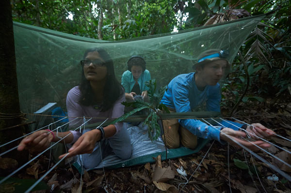 The three principal investigators in season 2014 – (left to right) Mrinalini Watsa, Efstathia Robakis, and Gideon Erkenswick – wait for tamarins to enter the traps. Mrinalini and Gideon are operating strings that manually control trap doors, to avoid any unintentional captures, while Efstathia is recording tamarin vocalizations for a study of alarm calls and interspecies communication. Photo credit: Ishaan Raghunandan