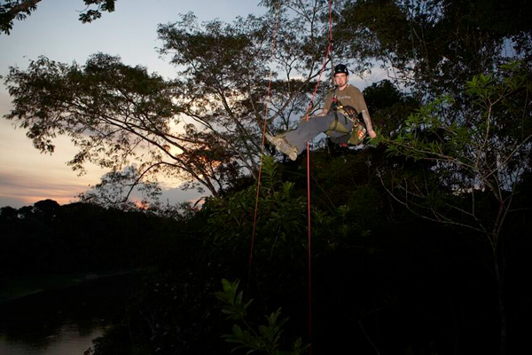 Rainforest in Indonesian Borneo.