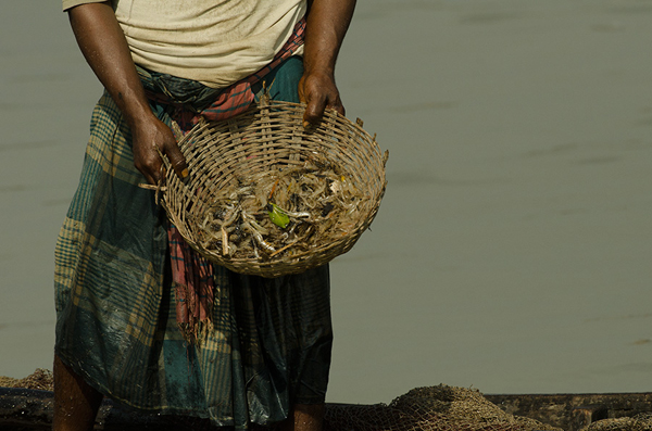 Fisher shows off meagre catch of oil-stained shrimp. Photo by: Arati Kumar-Rao.