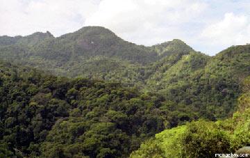 Mata Atlanticia in Rio de Janeiro. Photo Credit: Rhett A. Butler / mongabay.com.