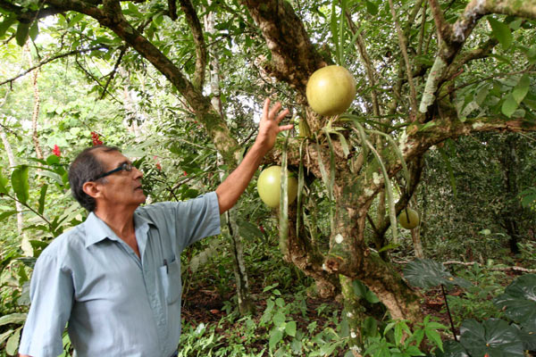Víctor Zambrano reaches for fruit from a tree in the private conservation area that he established on his property in Peru's southeastern Madre de Dios region. Tourism can help reduce poverty near protected areas, but experts say more research is needed to understand the trade-offs involved. Photo credit: Barbara Fraser.