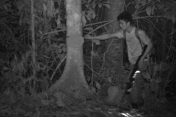 A hunter on camera trap in Silabukan Forest Reserve carrying a semi-automatic shotgun. Photo by: Photo courtesy of Danau Girang Field Centre.
