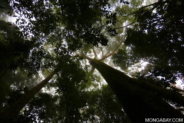 Mata Atlantica rainforest