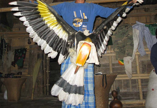 A great hornbill that was hunted by the Mro people.  Photo courtesy of Shahriar Caesar Rahman.