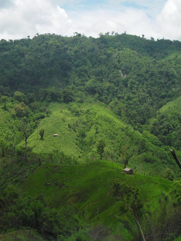 Landscape in the Chittagong Hill Tracts. Photo courtesy of Shahriar Caesar Rahman.