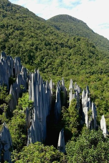 Limestone pillars and forest in Gunung Mulu National Park, Sarawak. Photo by Morgan Erickson-Davis.
