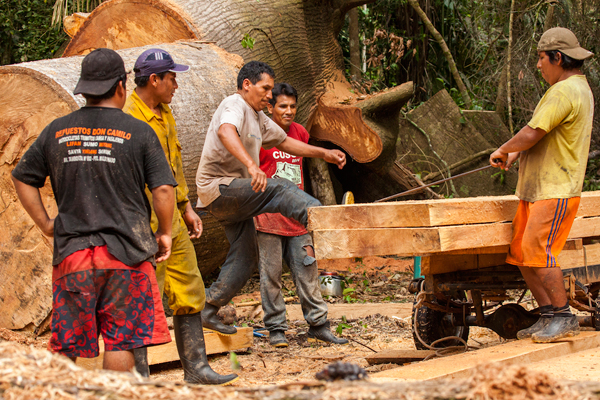 Loggers loading wood for transport. Photo by: Photo by: Tristan Thompson.