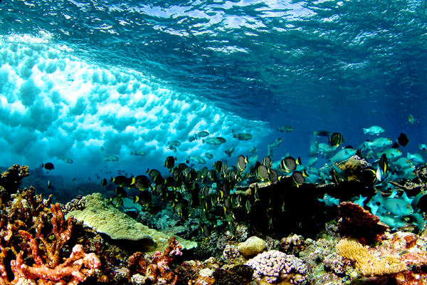 A wave breaks over a remote reef. Photo by: Brian J. Zgliczynski.