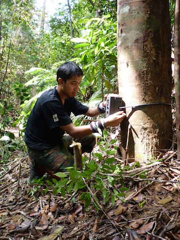 The research team set camera traps in forests near roads. Photo by Reuben Clements.