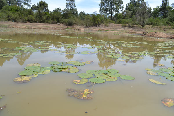 Diminishing waters of Lily Lake in Karura. Photo credit: Protus Onyango.